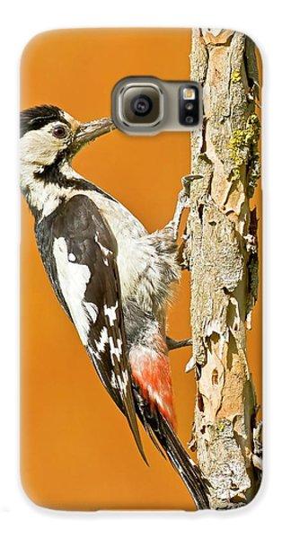 Syrian Woodpecker (dendrocopos Syriacus) Galaxy S6 Case by Photostock-israel