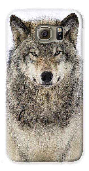Wolves Galaxy S6 Case - Timber Wolf Portrait by Tony Beck