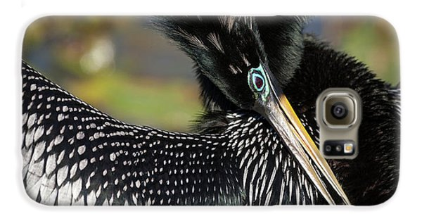 Usa, Florida, Everglades National Park Galaxy S6 Case