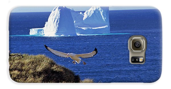 Wandering Albatross (diomendea Exulans Galaxy S6 Case by Martin Zwick