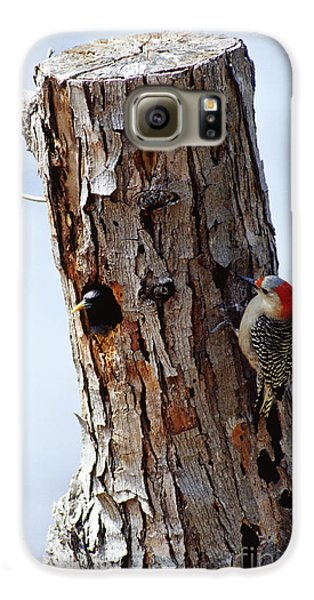 Woodpecker And Starling Fight For Nest Galaxy S6 Case by Gregory G. Dimijian