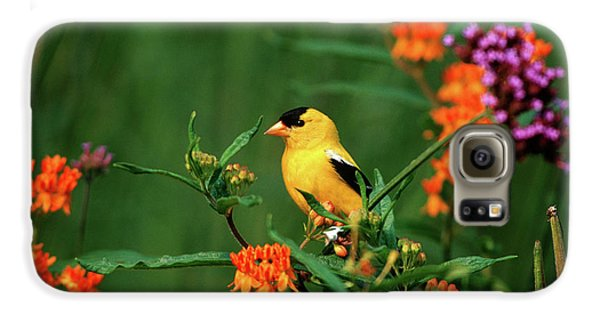 Canary Galaxy S6 Case - American Goldfinch (carduelis Tristis by Richard and Susan Day