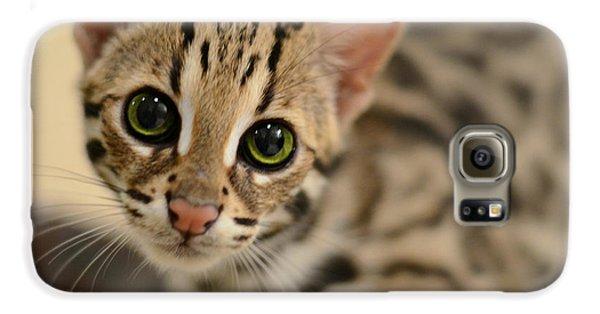 Cat Galaxy S6 Case - Asian Leopard Cub by Laura Fasulo