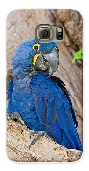 Macaw Galaxy S6 Case - Close-up Of A Hyacinth Macaw by Panoramic Images