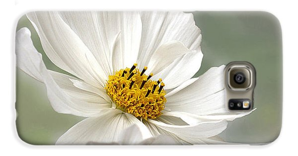 Cosmos Flower In White Galaxy S6 Case