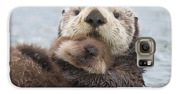 Otter Galaxy S6 Case - Female Sea Otter Holding Newborn Pup by Milo Burcham