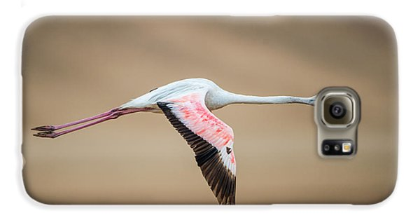 Greater Flamingo Phoenicopterus Roseus Galaxy S6 Case by Panoramic Images