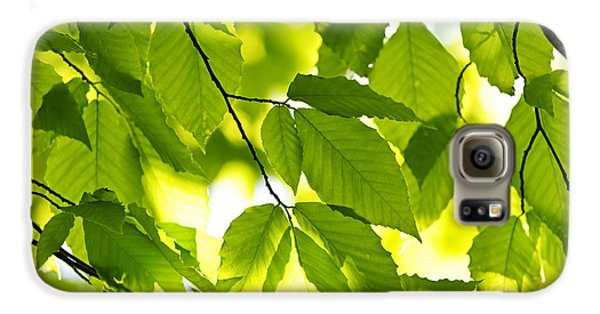 Green Spring Leaves Galaxy S6 Case