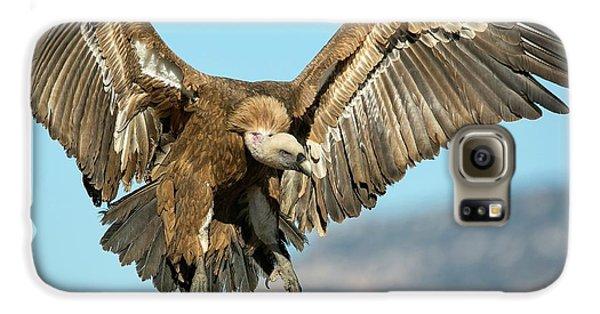 Griffon Vulture Flying Galaxy S6 Case by Nicolas Reusens
