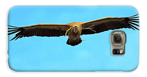 Griffon Galaxy S6 Case - Griffon Vulture In Flight by Bildagentur-online/mcphoto-schaef