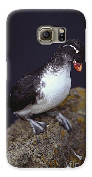 Parakeet Auklet Galaxy S6 Case