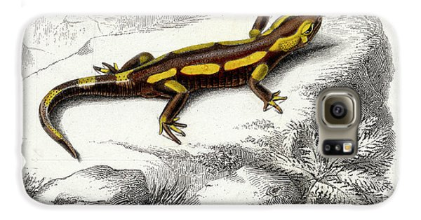 Salamanders Galaxy S6 Case - Salamander by Collection Abecasis