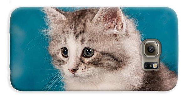 Cat Galaxy S6 Case - Sibirian Cat Kitten by Doreen Zorn