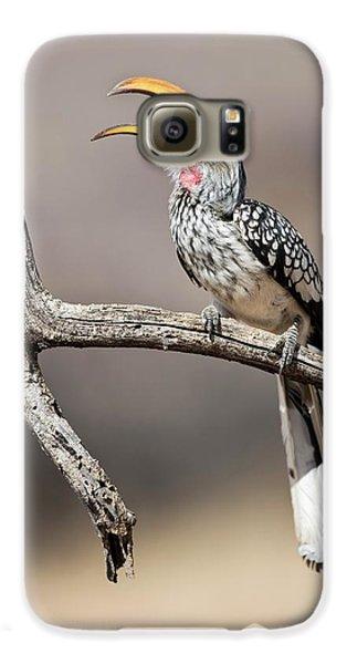 Hornbill Galaxy S6 Case - Southern Yellow-billed Hornbill by Tony Camacho