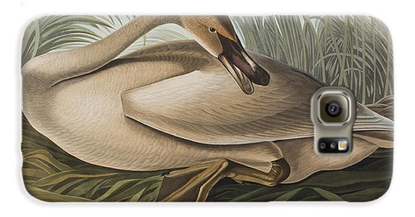Trumpeter Swan Galaxy S6 Case by John James Audubon