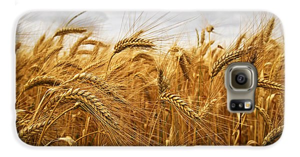 Wheat Galaxy S6 Case by Elena Elisseeva