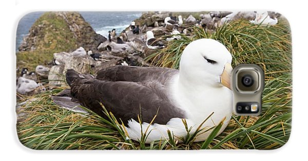 A Black Browed Albatross Galaxy S6 Case by Ashley Cooper
