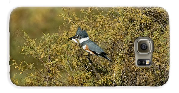 Belted Kingfisher With Fish Galaxy S6 Case