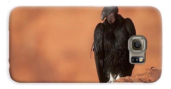California Condor Galaxy S6 Case