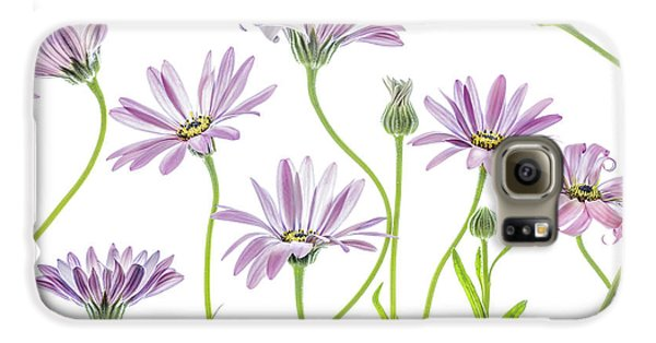 Daisy Galaxy S6 Case - Cape Daisies by Mandy Disher