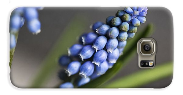 Grape Hyacinth Galaxy S6 Case by Nailia Schwarz