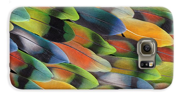 Lovebird Galaxy S6 Case - Lovebird Tail Feather Pattern And Design by Darrell Gulin