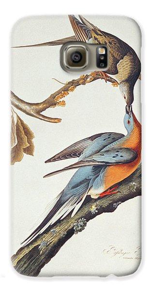 Pigeon Galaxy S6 Case - Passenger Pigeon by John James Audubon