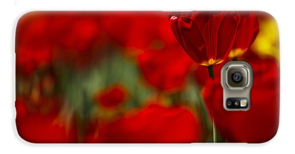 Tulip Galaxy S6 Case - Red And Yellow Tulips by Nailia Schwarz