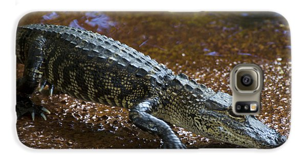 American Alligator Galaxy S6 Case by Mark Newman