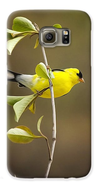 American Goldfinch Galaxy S6 Case by Christina Rollo
