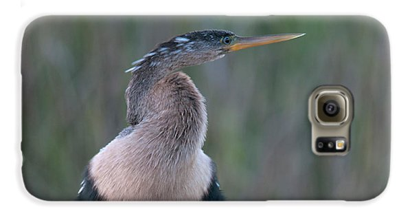 Anhinga Galaxy S6 Case by Mark Newman