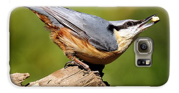 Nuthatch Galaxy S6 Case