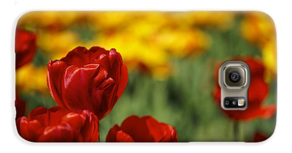 Red And Yellow Tulips Galaxy S6 Case by Nailia Schwarz