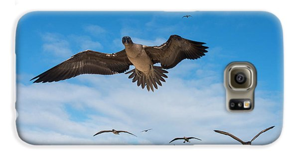 Red-footed Booby (sula Sula Websteri Galaxy S6 Case