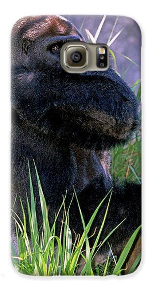 Silverback Western Lowland Gorilla Galaxy S6 Case