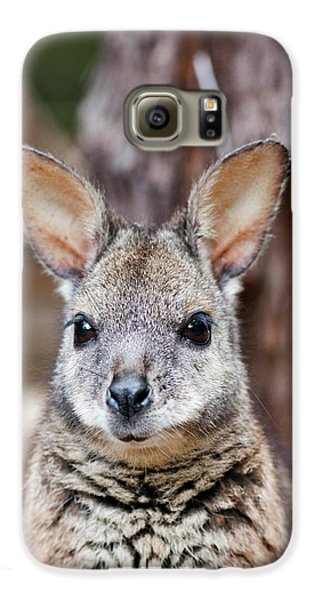 Tammar Wallaby (macropus Eugenii Galaxy S6 Case
