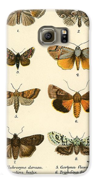 Butterflies Galaxy S6 Case by English School