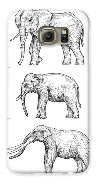 Elephant Evolution, Artwork Galaxy S6 Case by Gary Hincks