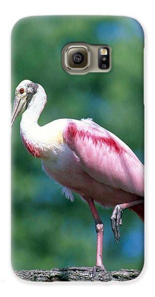 Roseate Spoonbill Galaxy S6 Case