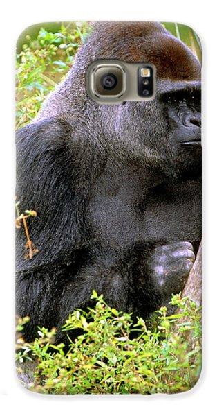 Western Lowland Gorilla Galaxy S6 Case