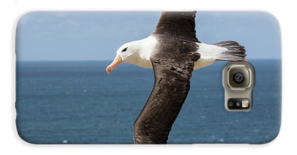 Black-browed Albatross (thalassarche Galaxy S6 Case by Martin Zwick