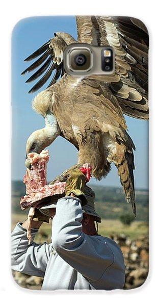 Griffon Galaxy S6 Case - Griffon Vulture Conservation by Nicolas Reusens