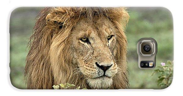 Lion Galaxy S6 Case - Africa, Tanzania, Serengeti by Charles Sleicher