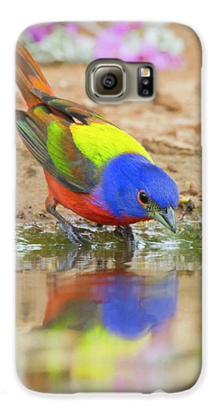 Bunting Galaxy S6 Case - Painted Bunting (passerina Ciris by Larry Ditto