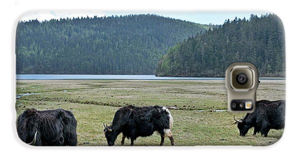 Yak Galaxy S6 Case - A Herd Of Yaks In Potatso National Park by Tony Camacho