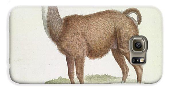 Llama Galaxy S6 Case - A Male Llama by British Library
