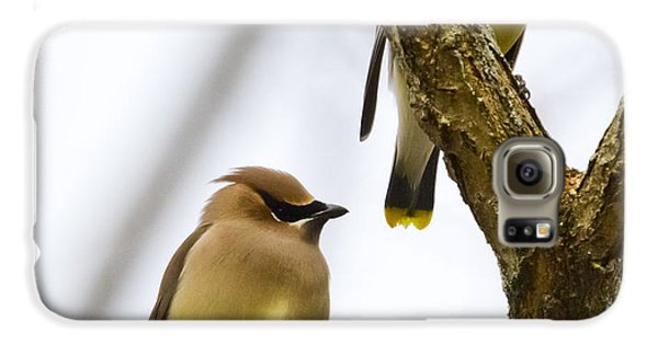 Galaxy S6 Case featuring the photograph A Pair Of Cedar Waxwings by Ricky L Jones