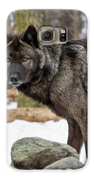 A Wolf's Intense Focus Galaxy S6 Case
