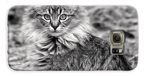A Young Maine Coon Galaxy S6 Case