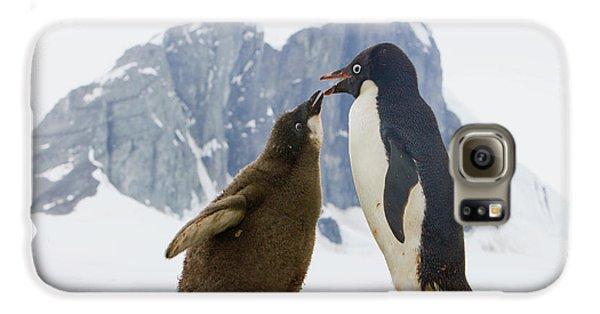Adelie Penguin Chick Begging For Food Galaxy S6 Case by Yva Momatiuk John Eastcott